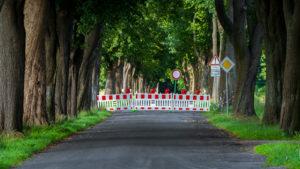 Roadblock in trees