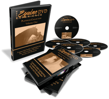 horse dvds